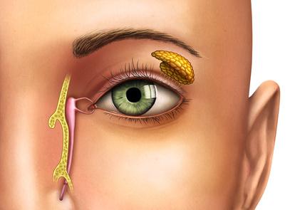 Illustration de canaux lacrymaux d'un oeil gauche